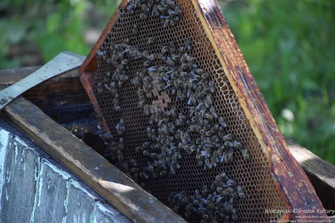 Galeria W świecie pszczół